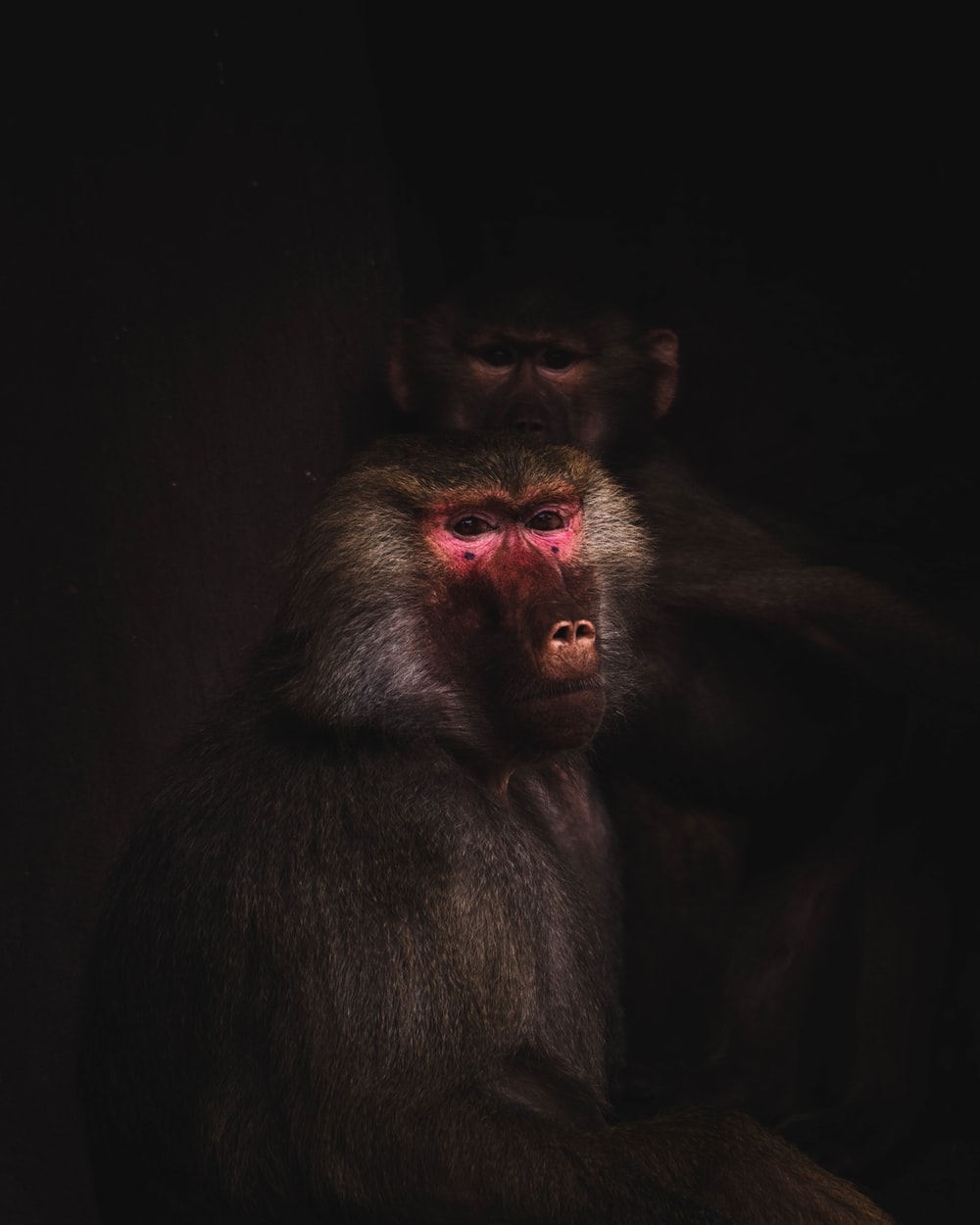 black monkey in close up photography