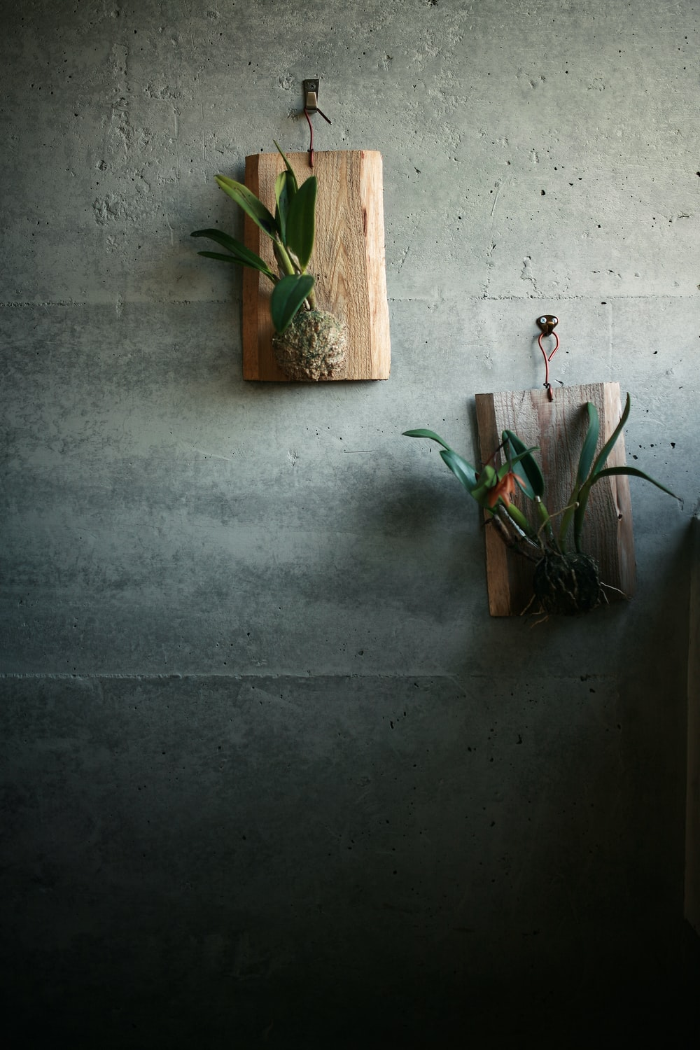green cactus plant on brown wooden pot