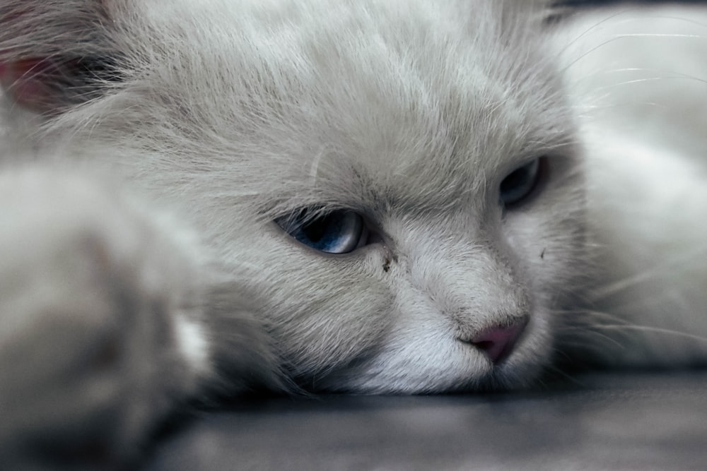 white and gray kitten on black surface