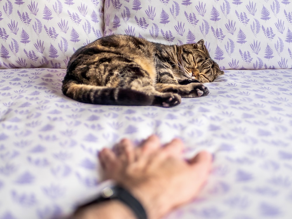 brown tabby cat lying on white and blue floral bed linen