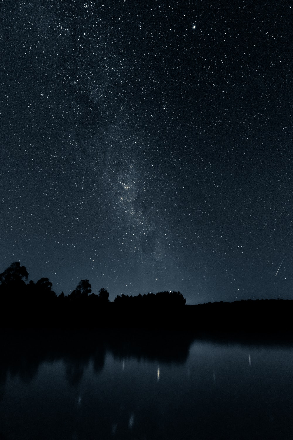 silhouette of trees near body of water under starry night