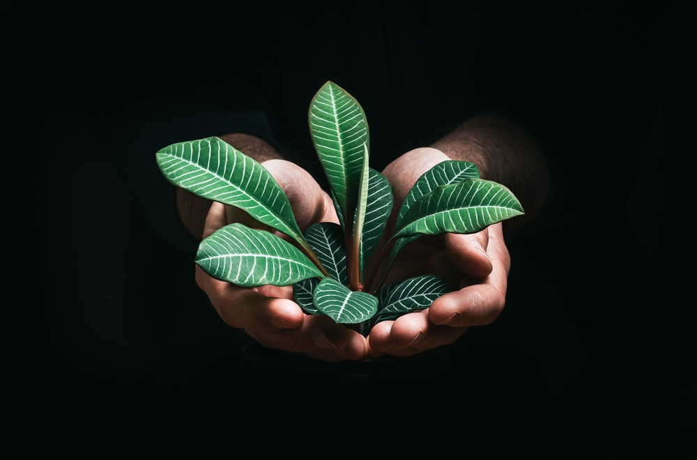 person holding green leaves in dark room