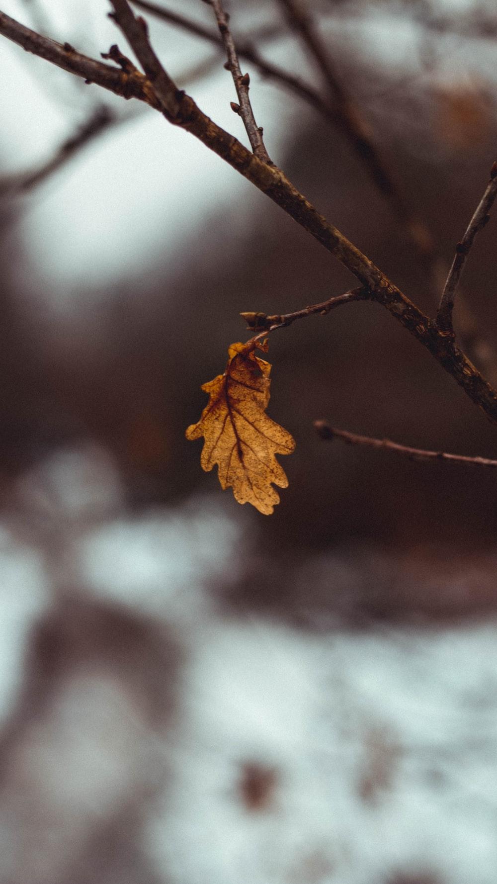 brown leaf on brown tree branch