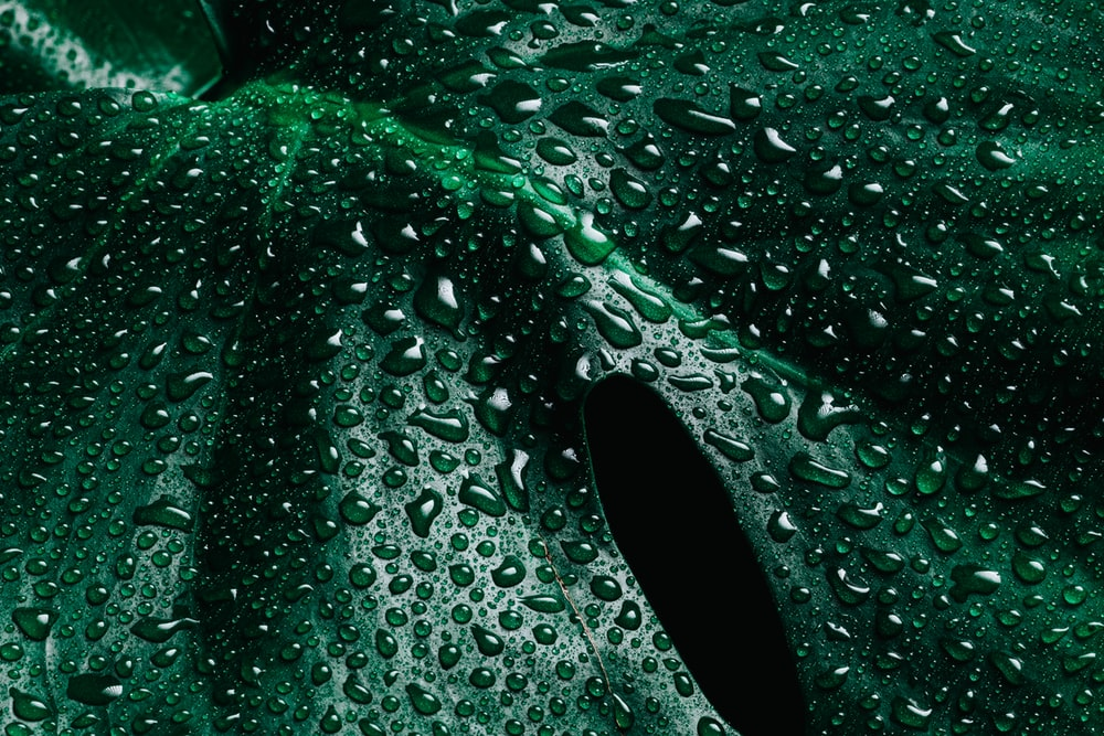 water droplets on green glass