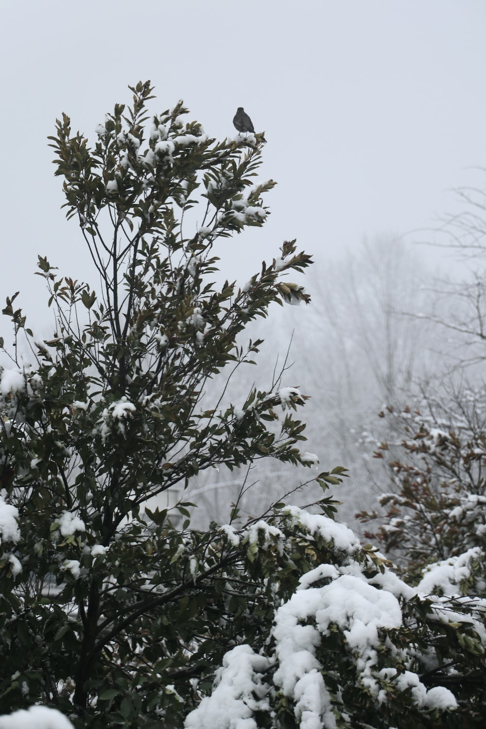 green plant covered with snow