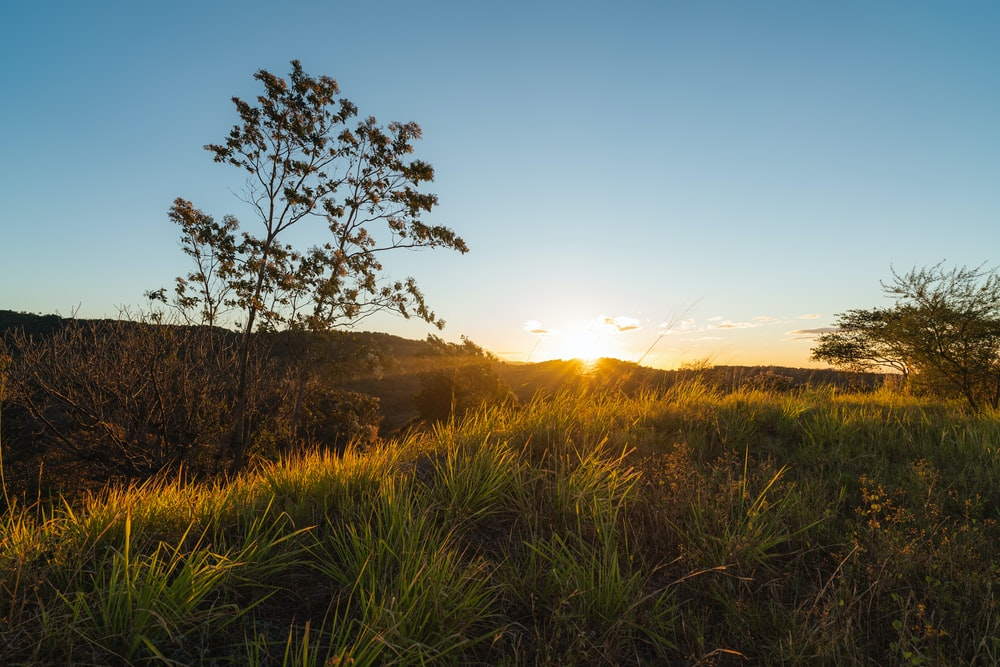 green grass field during sunrise