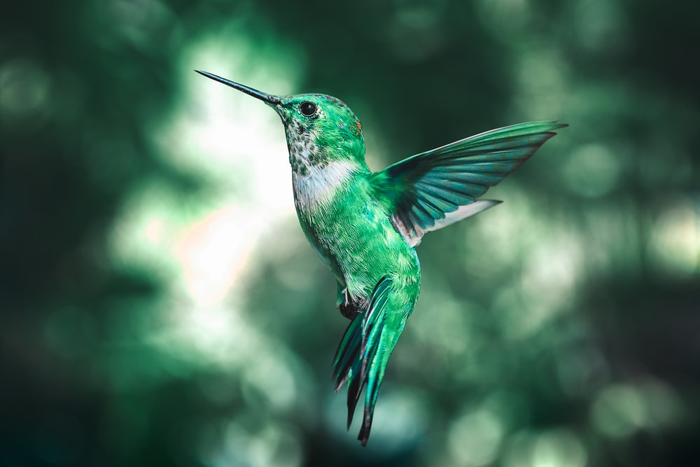 green and black humming bird