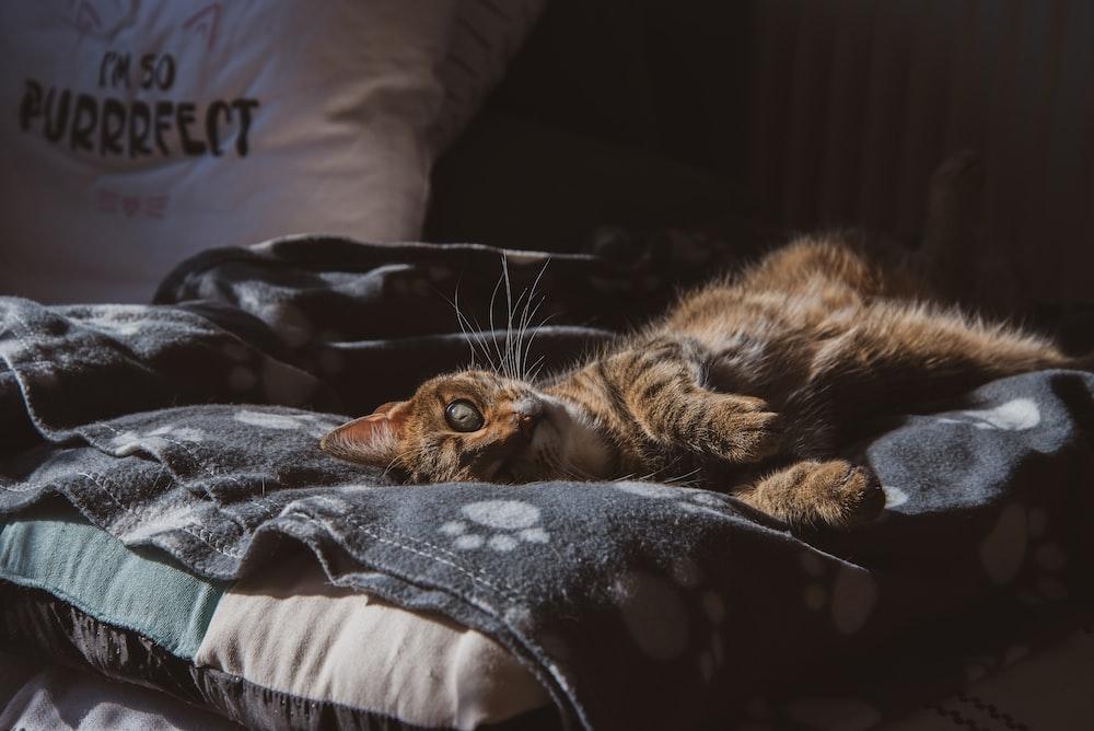 brown tabby cat lying on black textile