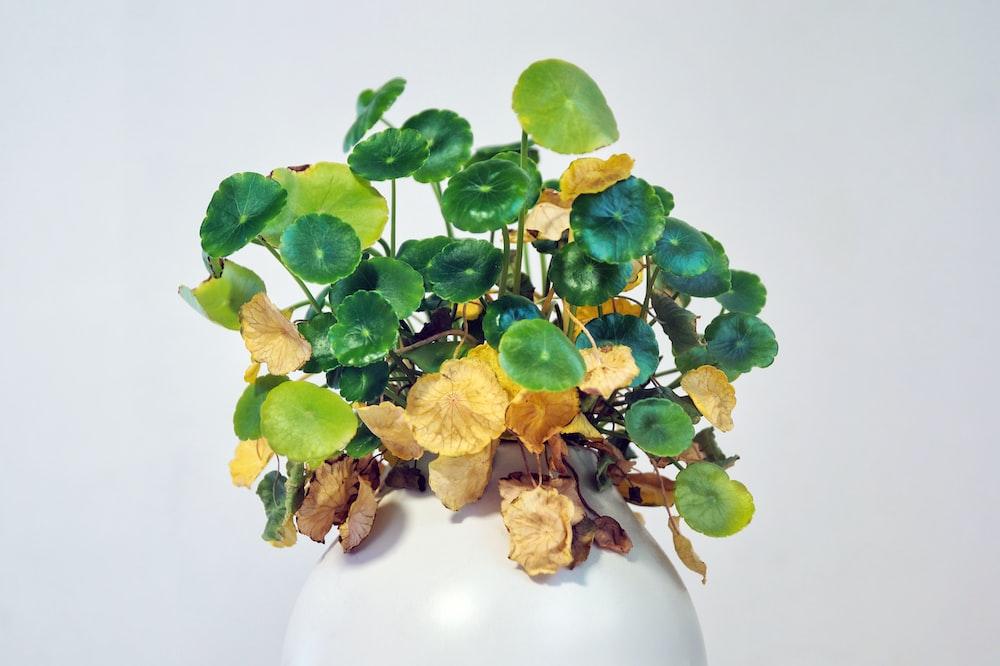 green and brown plant on white ceramic vase