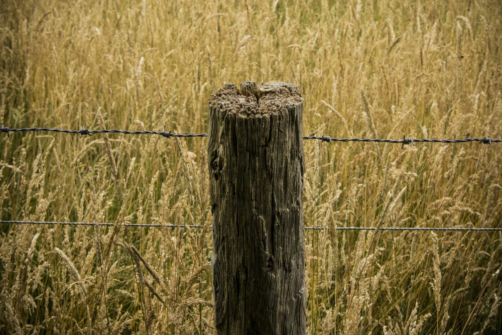 brown wooden post with barbwire