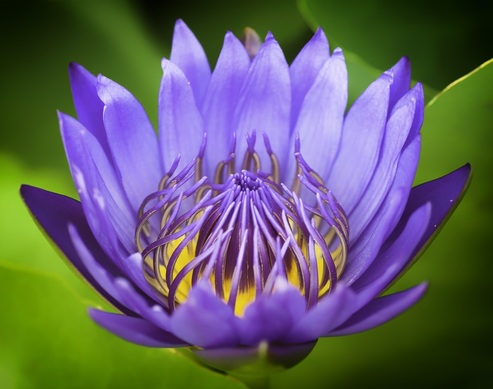 purple and white flower in macro photography