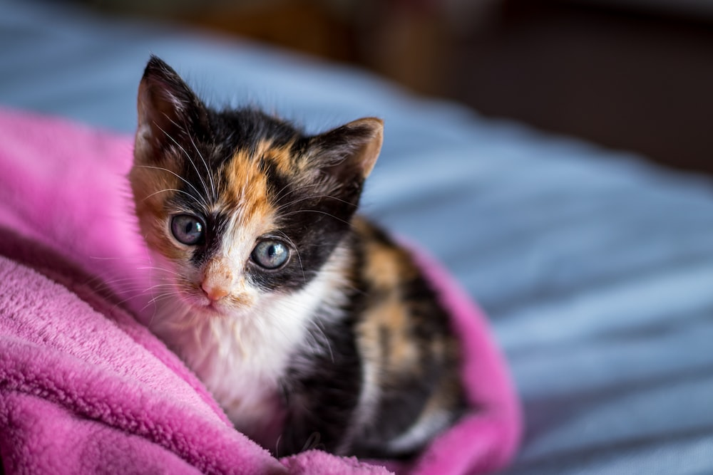 brown and white cat on pink textile