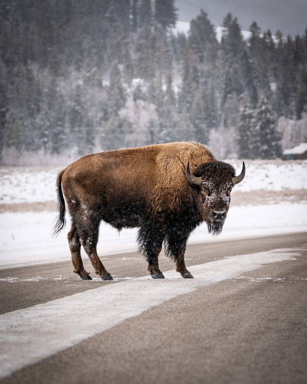 black bison on gray road during daytime