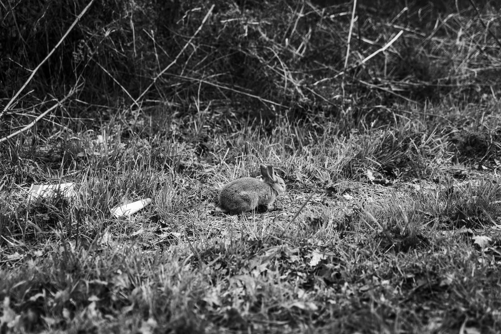 grayscale photo of a bird on grass