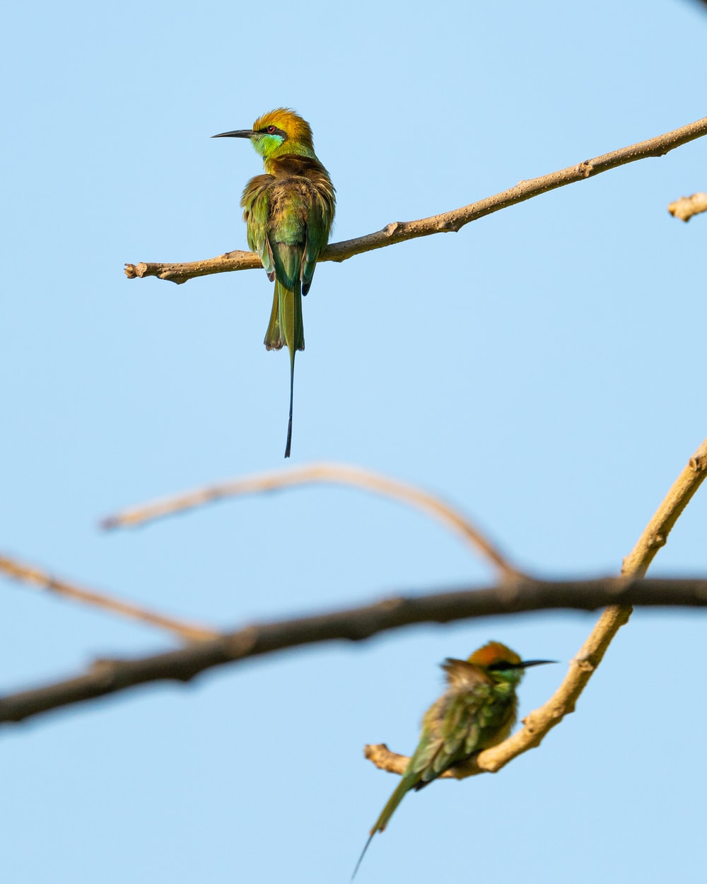 green and yellow bird on brown tree branch during daytime
