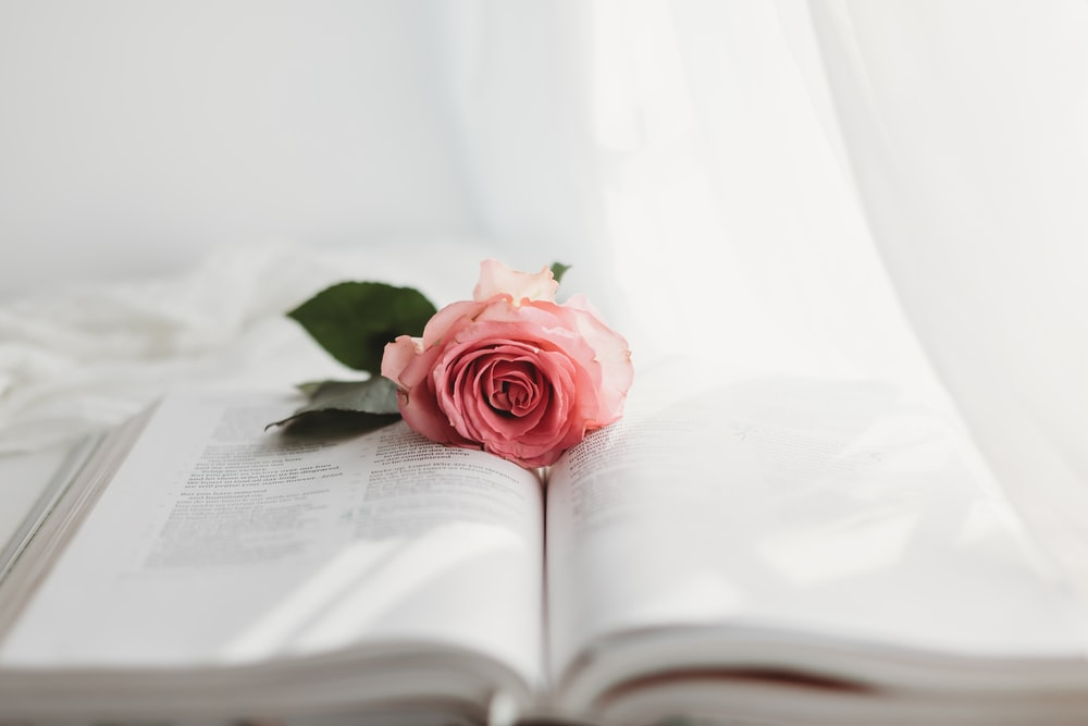 pink rose on white book page