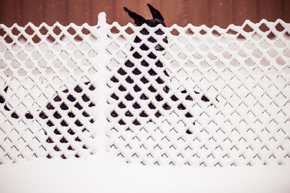 black bird on white net
