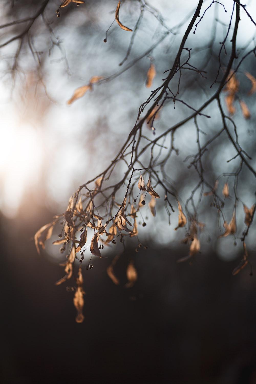 brown tree branch in tilt shift lens