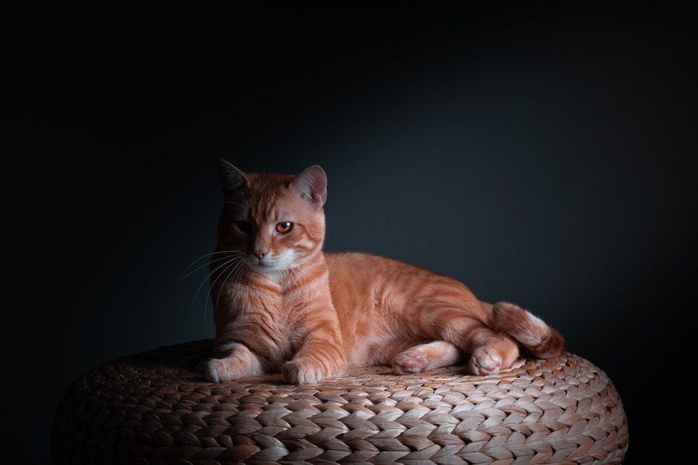 orange tabby cat lying on brown woven basket