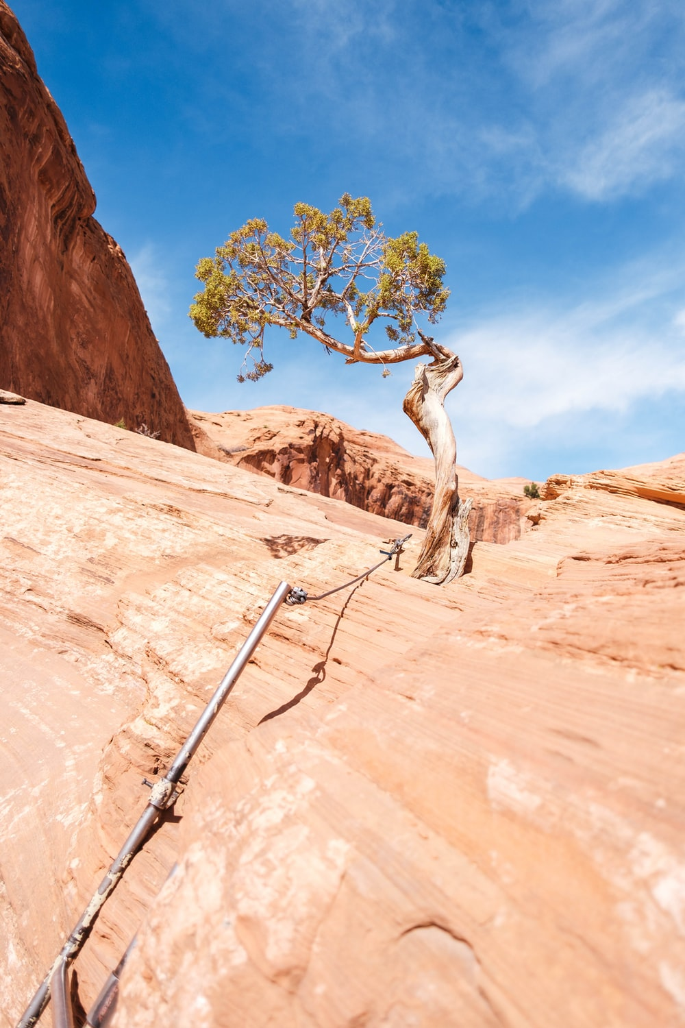 bare tree on brown rock formation under blue sky during daytime