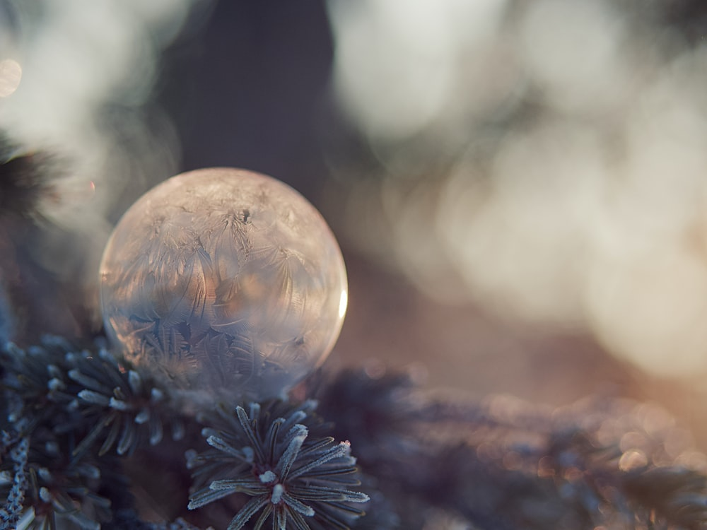 clear glass ball on green pine tree