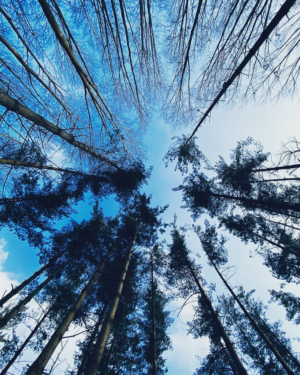 low angle photography of trees under blue sky during daytime