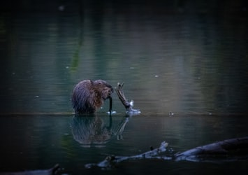 Life on a Beaver Dam
