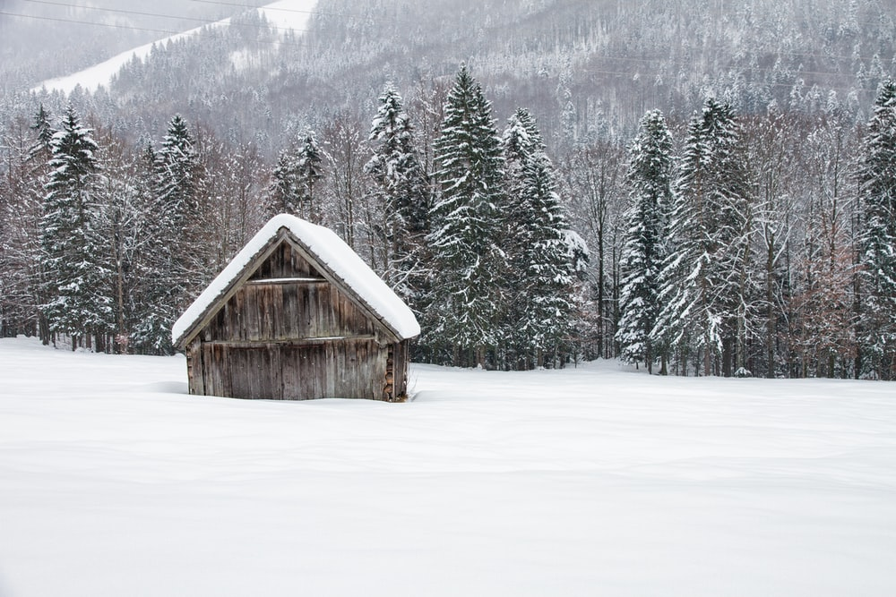 brown wooden house on snow covered ground near green pine trees during daytime