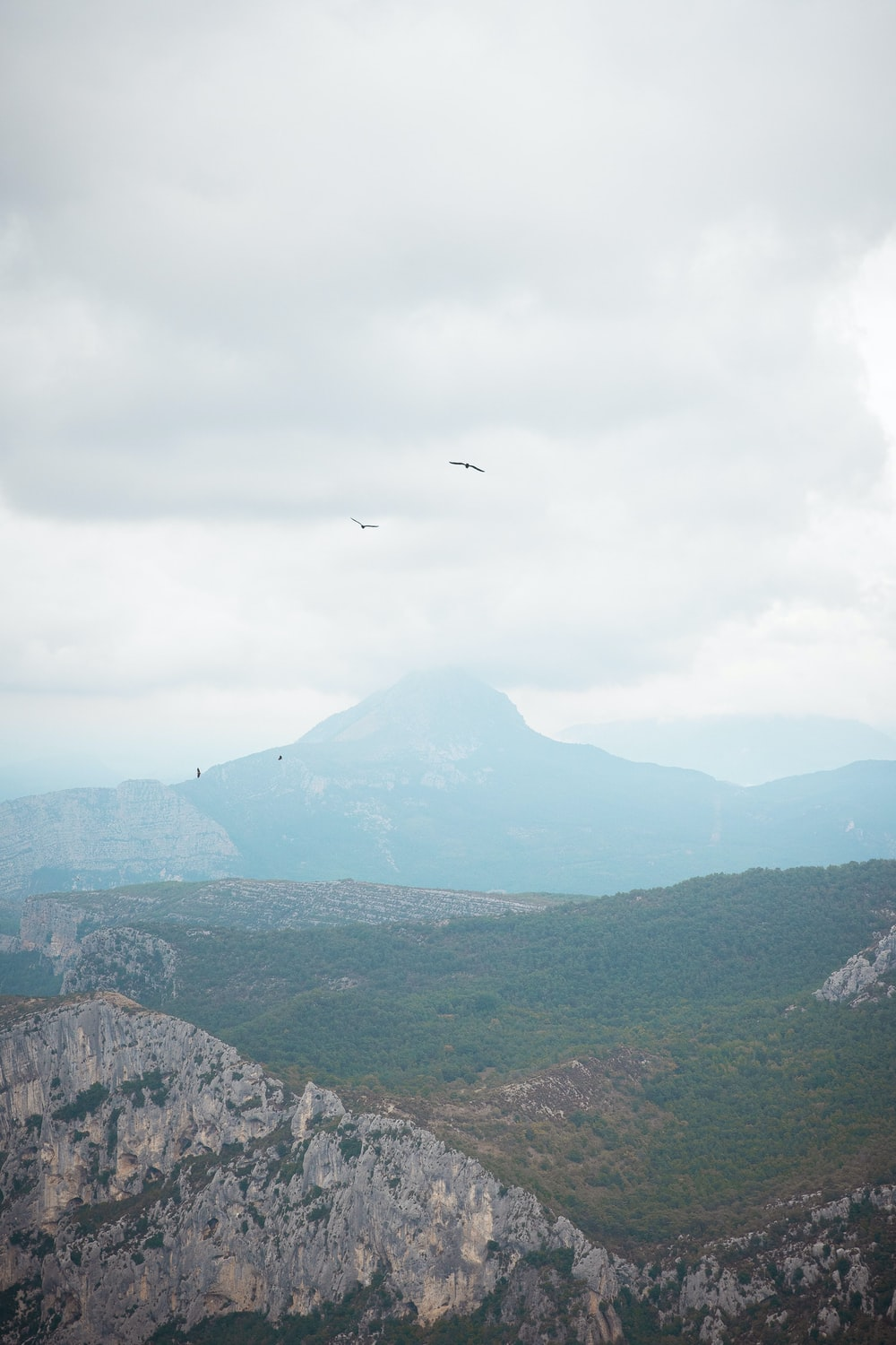 bird flying over green mountains during daytime
