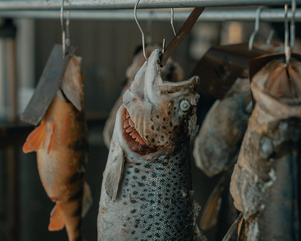 gray fish hanged on gray metal bar