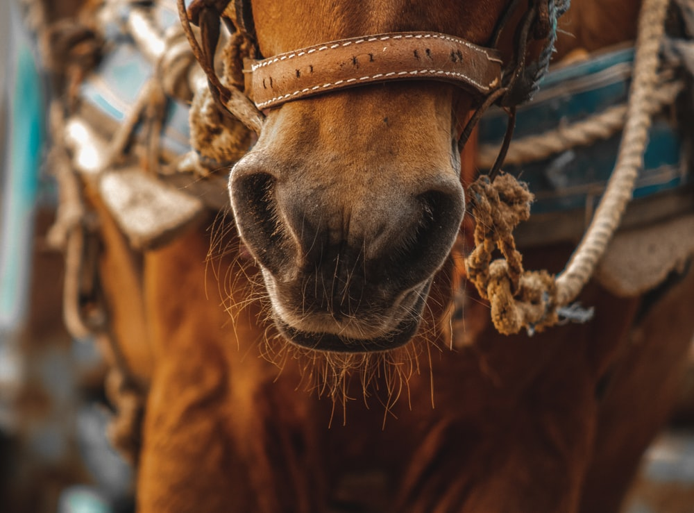brown horse with brown rope