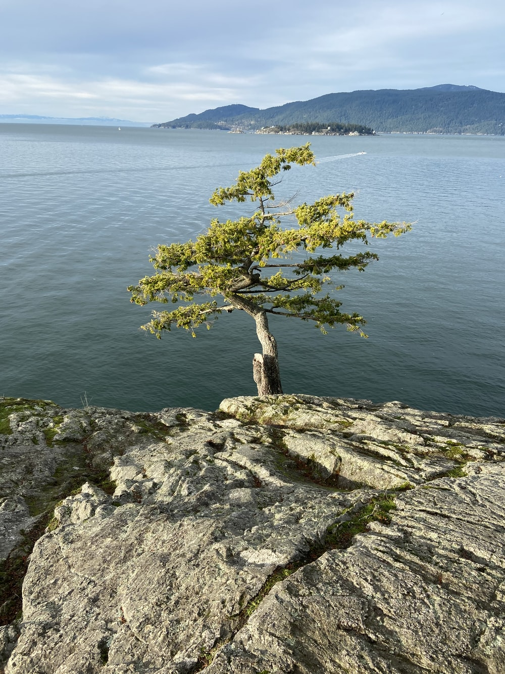 green tree on gray rock near body of water during daytime