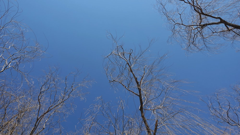 bare tree under blue sky during daytime