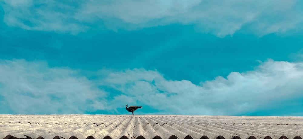 black bird flying over white sand during daytime