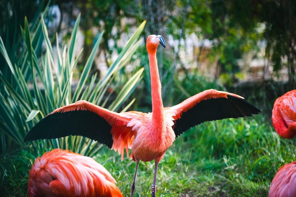 pink flamingo on green grass during daytime