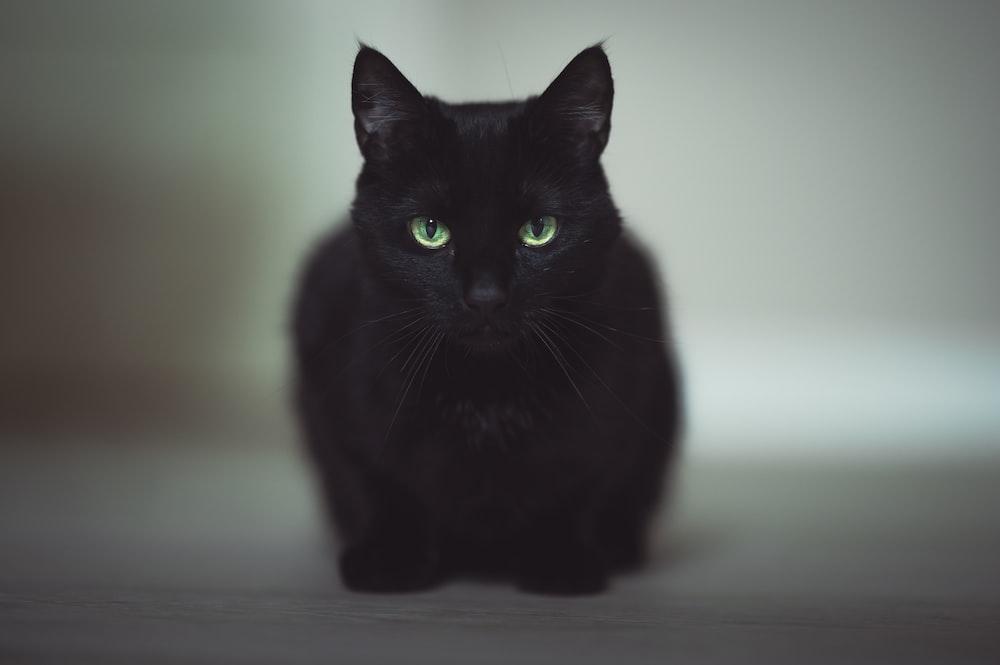 black cat on white floor