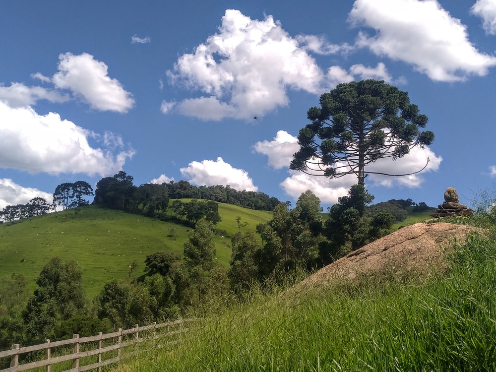 green grass field and trees under blue sky during daytime