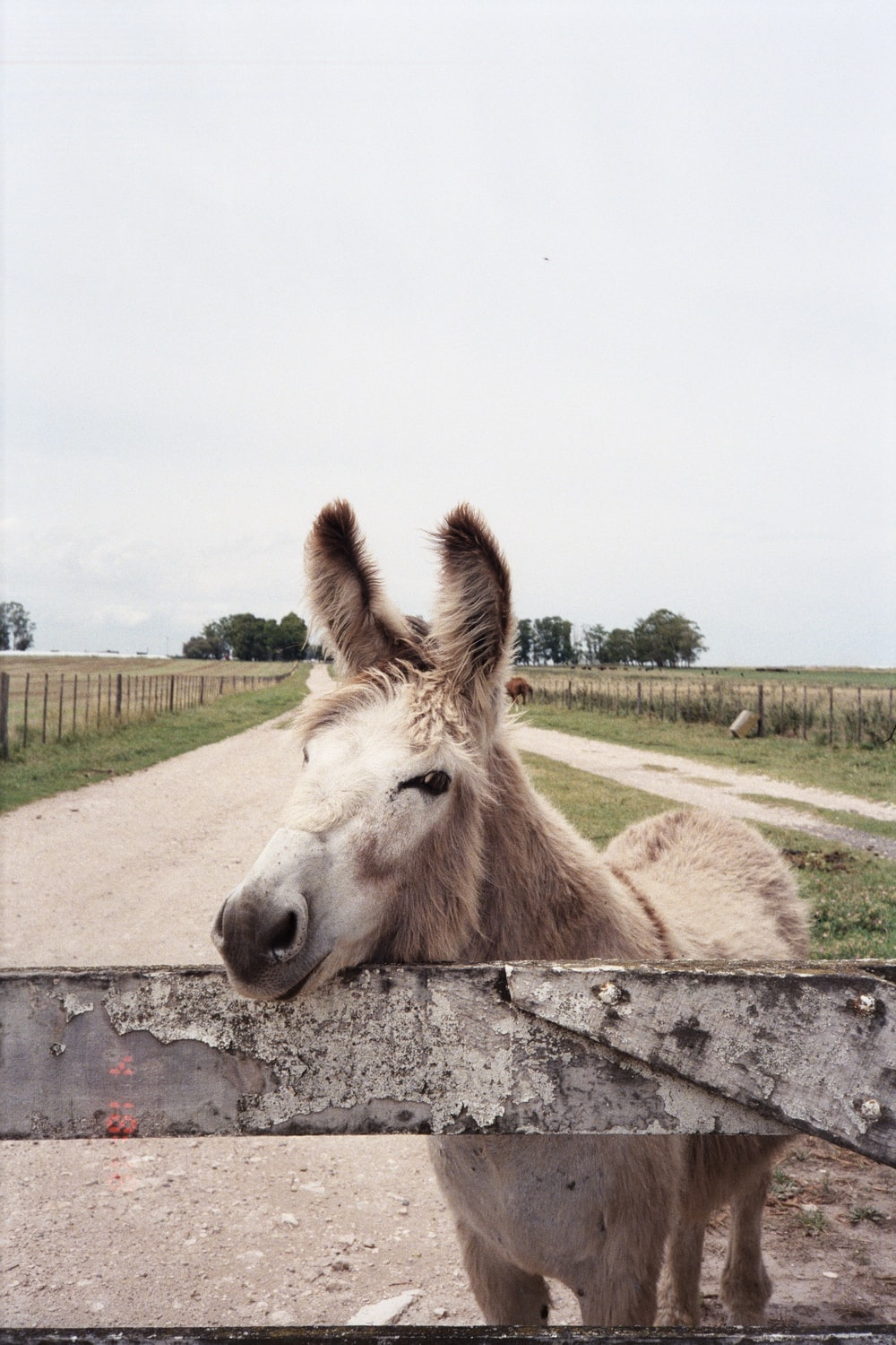 brown horse on gray concrete ground during daytime