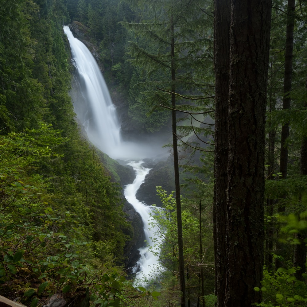 green trees and water falls