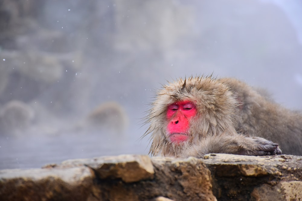 white monkey on brown rock