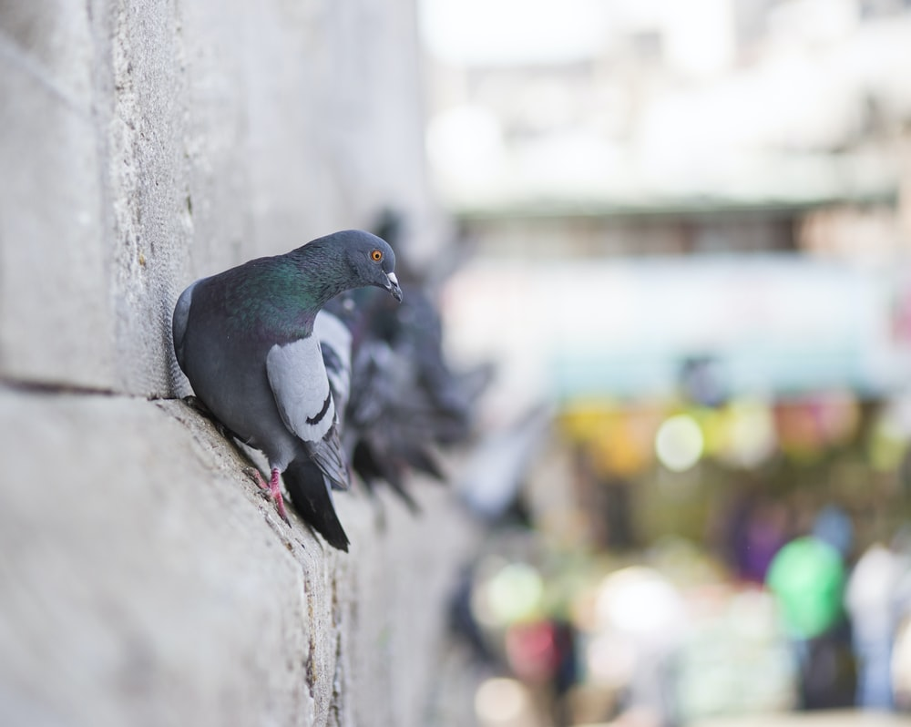 blue and gray bird on gray concrete wall