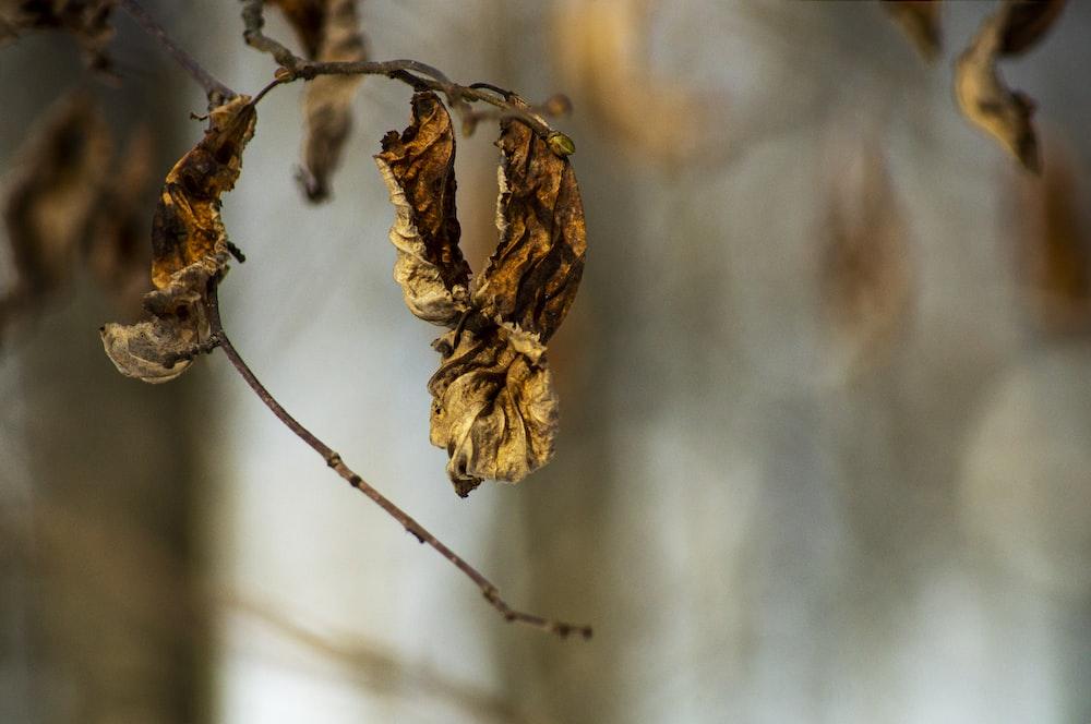 brown dried leaf in tilt shift lens