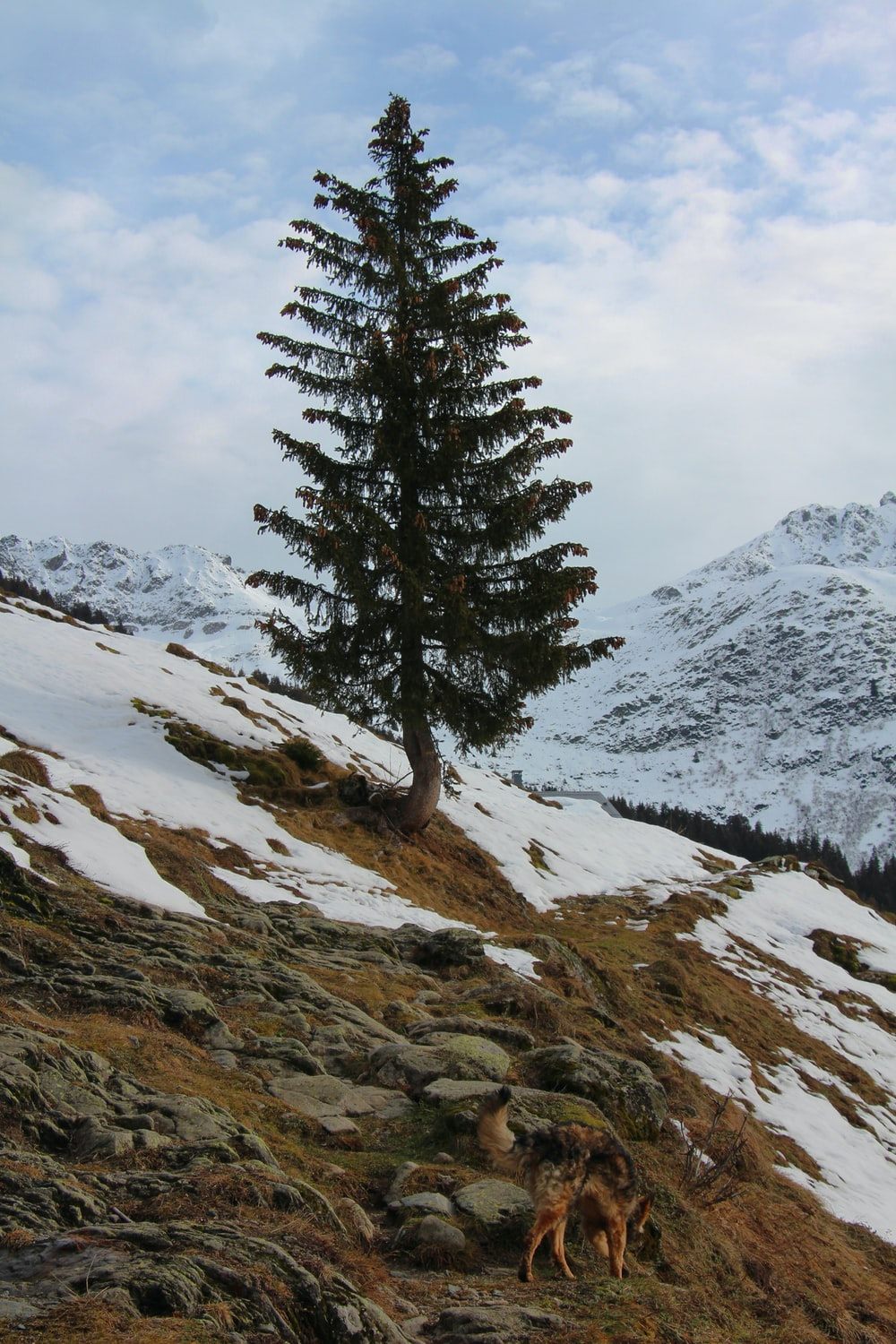 green pine tree on snow covered mountain during daytime