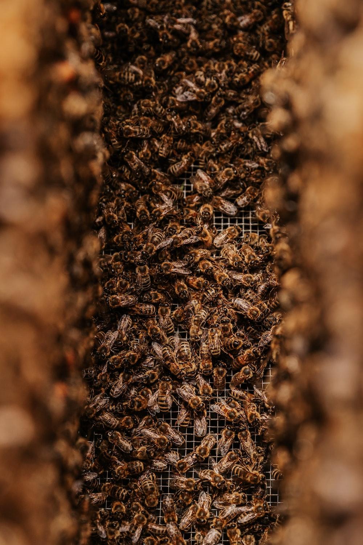 brown and black fur textile