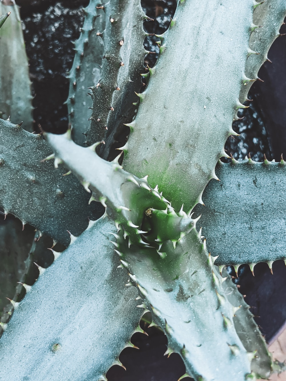 green cactus plant with water droplets