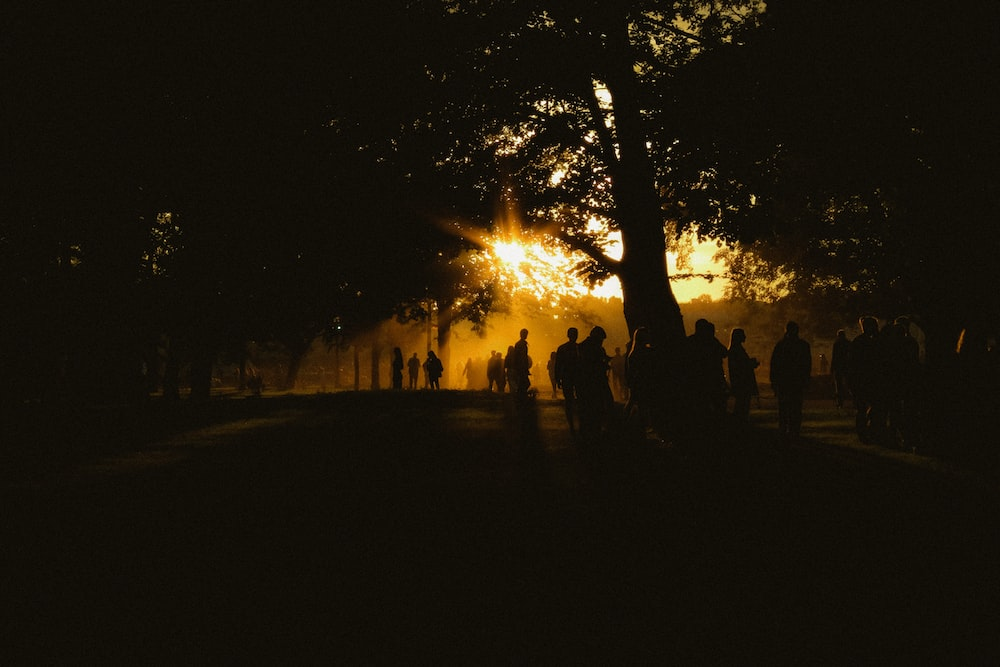 silhouette of people standing near trees during sunset