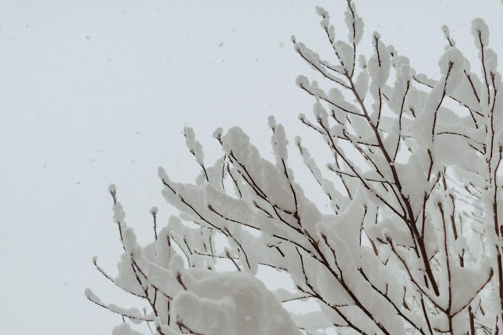 white leaf tree during daytime