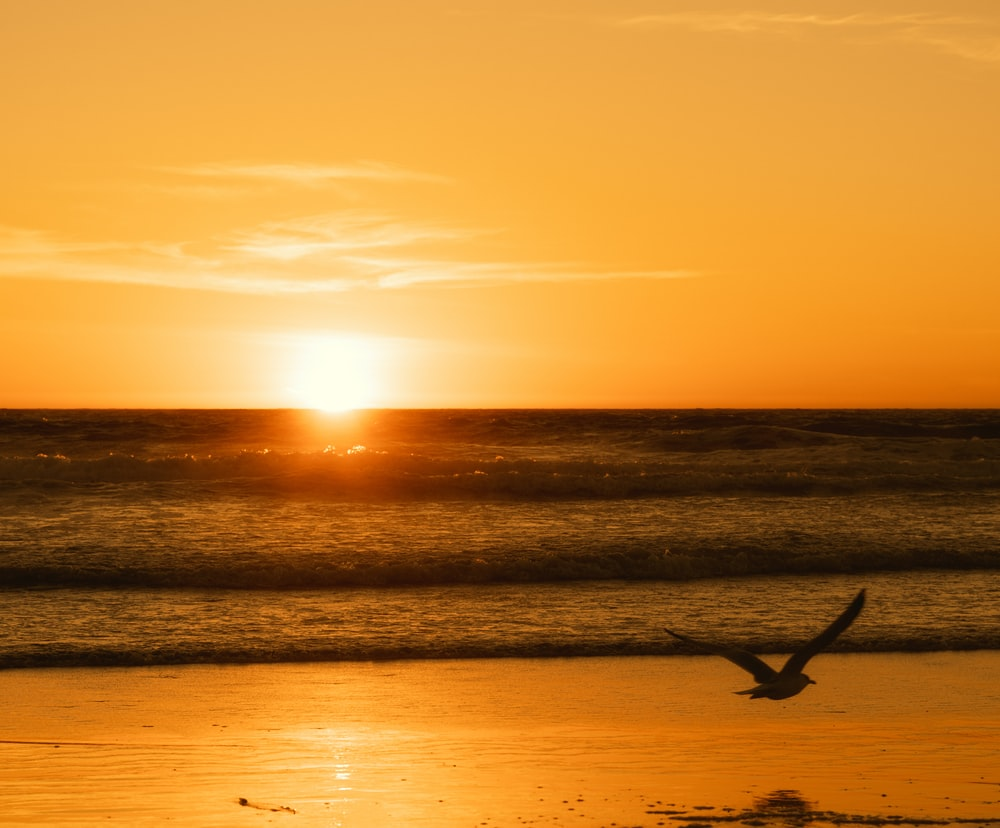 silhouette of person surfing on sea during sunset