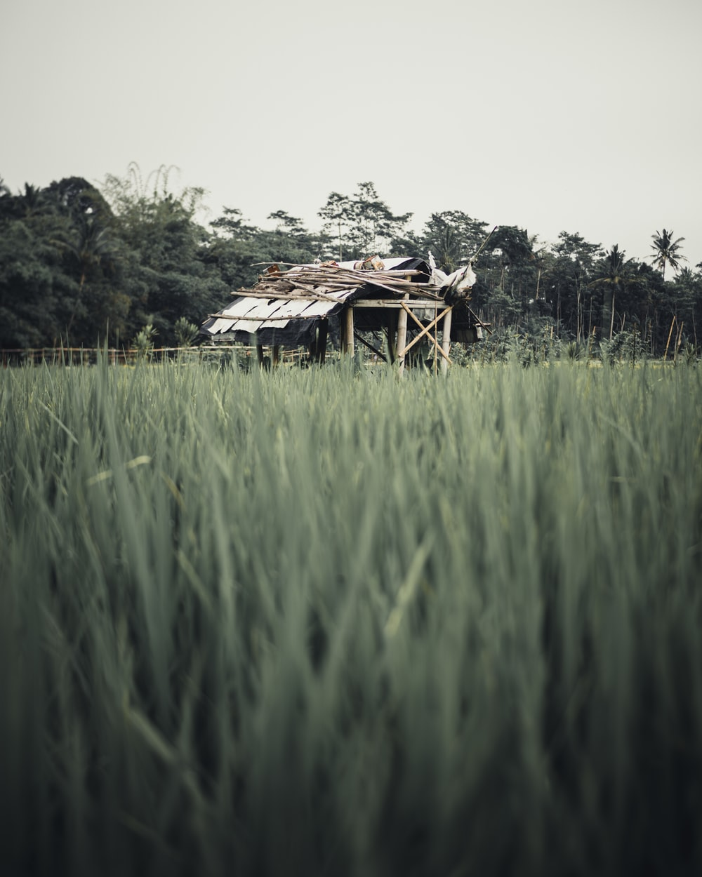 brown wooden house on green grass field during daytime