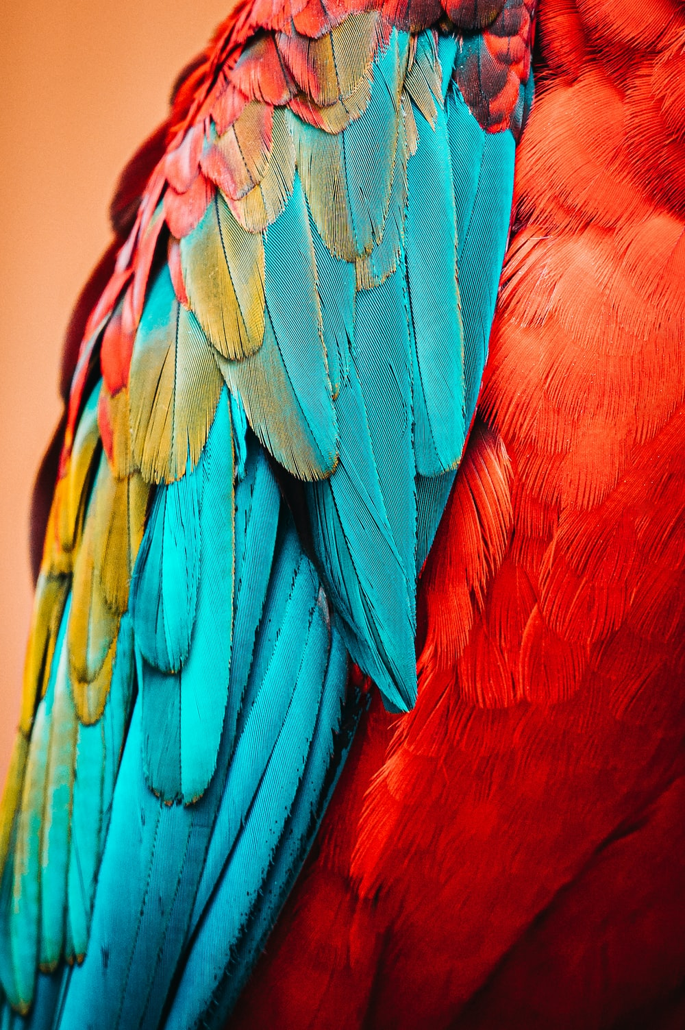 red blue and green bird